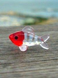 湘南の海江の島の赤い魚